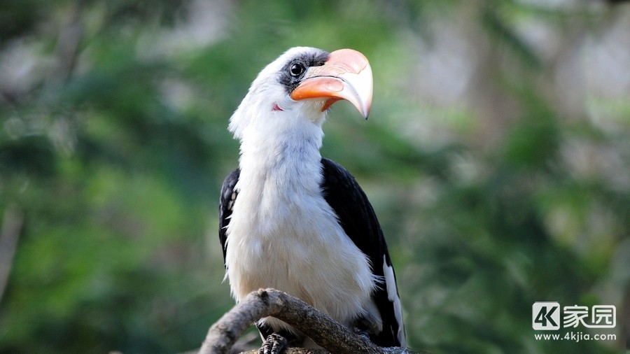 great-hornbill-bird-beak-3840x2160.jpg
