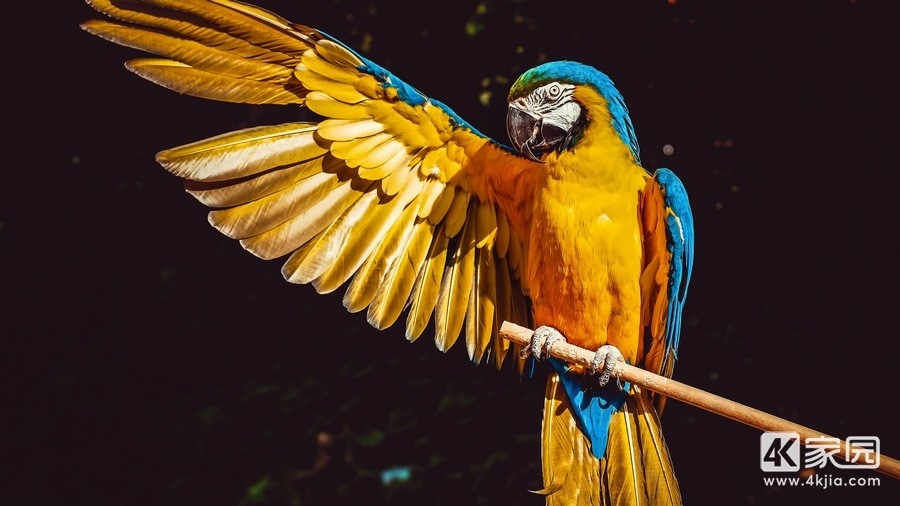 blue-and-yellow-macaw-5k-as-3840x2160.jpg