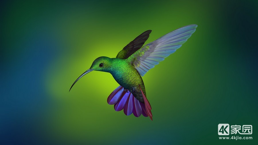 hummingbird-hd-kw-3840x2160.jpg