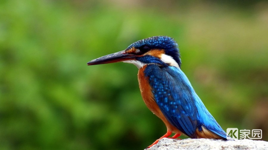 kingfisher-bird-3840x2160.jpg