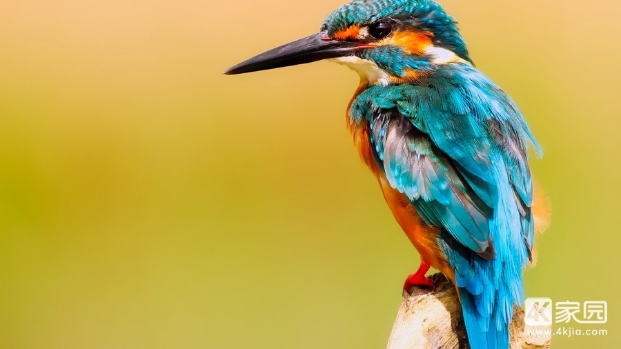 kingfisher-macro-99-3840x2160.jpg