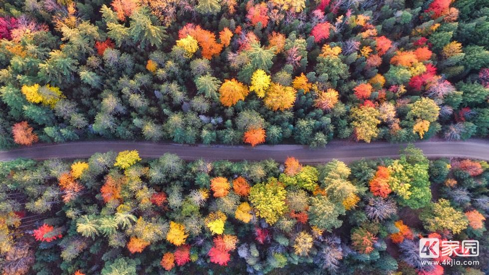 autumn-path-of-forest-drone-view-5r-3840x2160.jpg