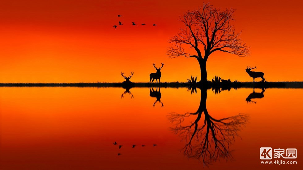 elk-on-horizon-sunset-evening-z6-3840x2160.jpg