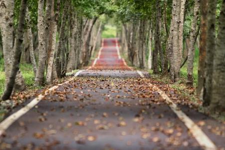 林间洒满落叶秋天的小路风景图片