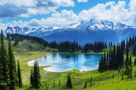 湖泊,森林,风景图片